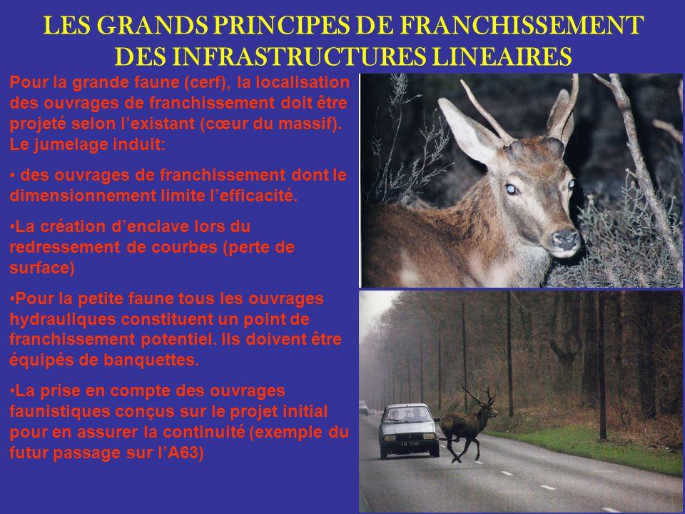 LES GRANDS PRINCIPES DE FRANCHISSEMENT DES INFRASTRUCTURES LINEAIRES Pour la grande faune (cerf), la localisation des ouvrages de franchissement doit