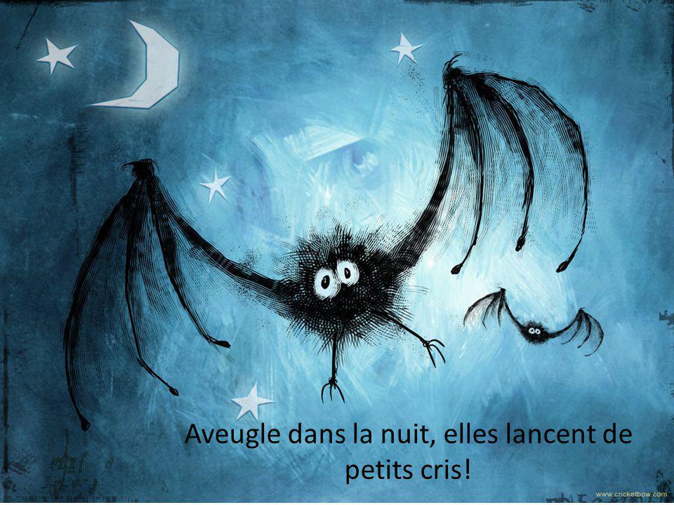 Aveugle dans la nuit, elles lancent de petits cris!