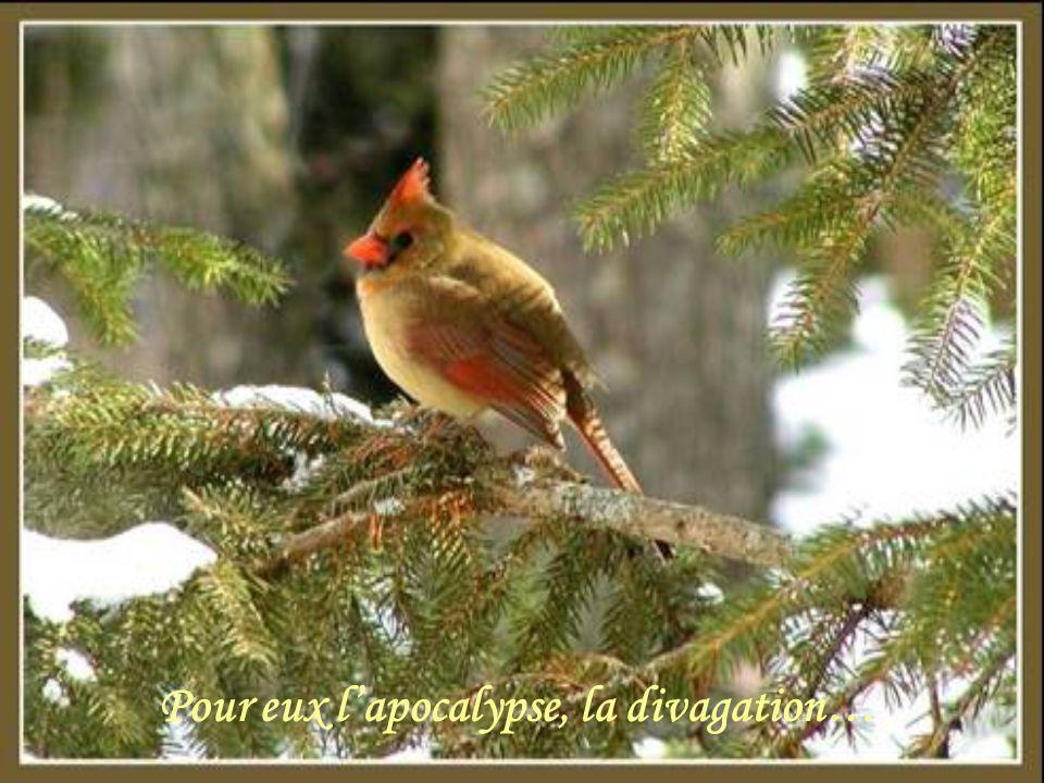 Les oiseaux cherchent leur nourriture,