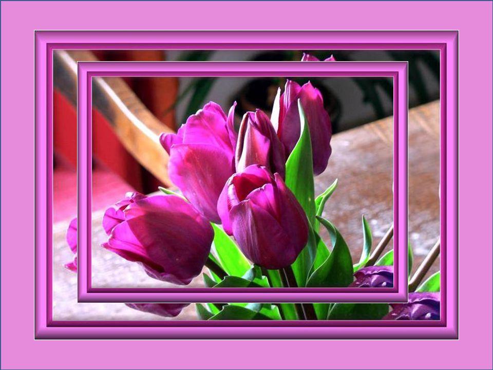 Un mot aimable est comme un jour de printemps… Proverbe russe Il nest pas dhiver sans neige, de printemps sans soleil, et de joie sans être partagée…