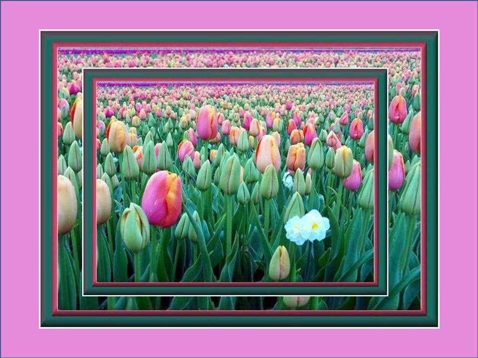Le printemps sannonce toujours rempli de promesses, sans jamais nous mentir, sans jamais défaillir… Michel Bouthot