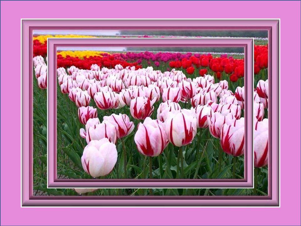 Les filles sont les roses de la couronne de la vie… Les roses et les filles font resplendir le printemps… Heinrich Heine