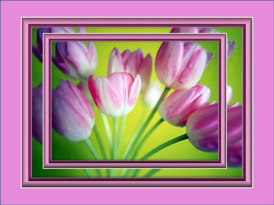 Le printemps, cest tout un poème. On en parle, on le pratique, on lattend… Alphonse Boudard