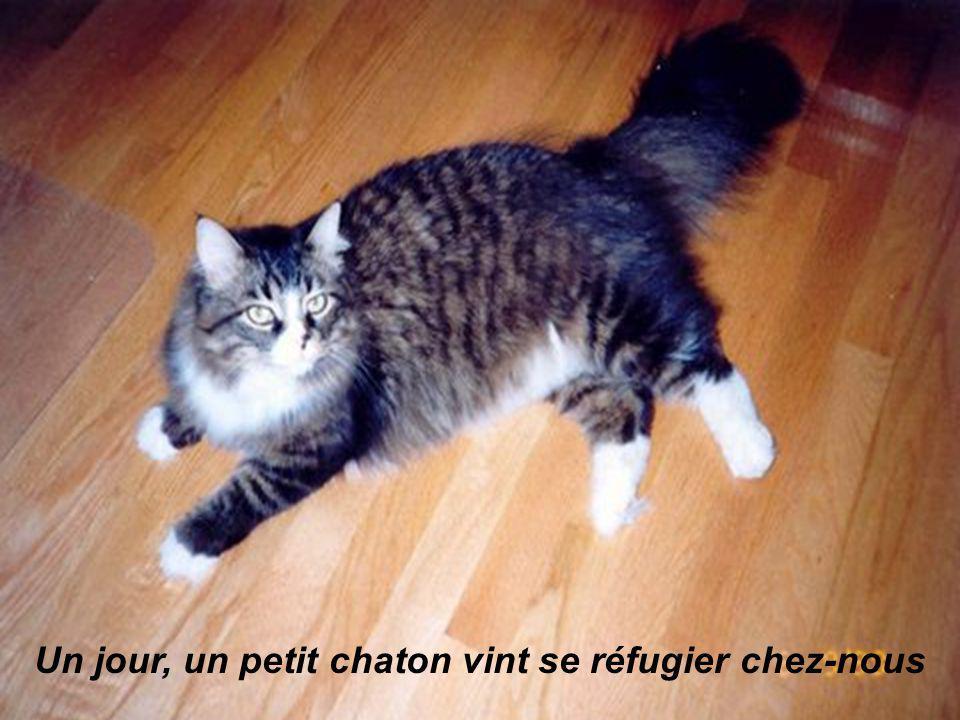 Un jour, un petit chaton vint se réfugier chez-nous