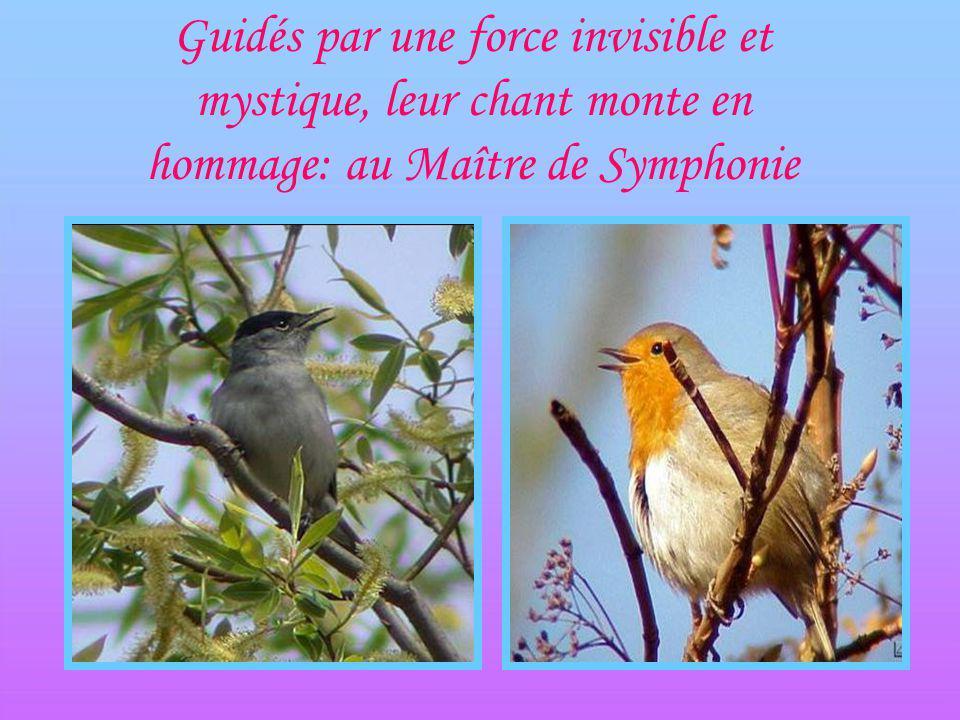 Les oiseaux dansent, saccouplent et préparent leurs nids