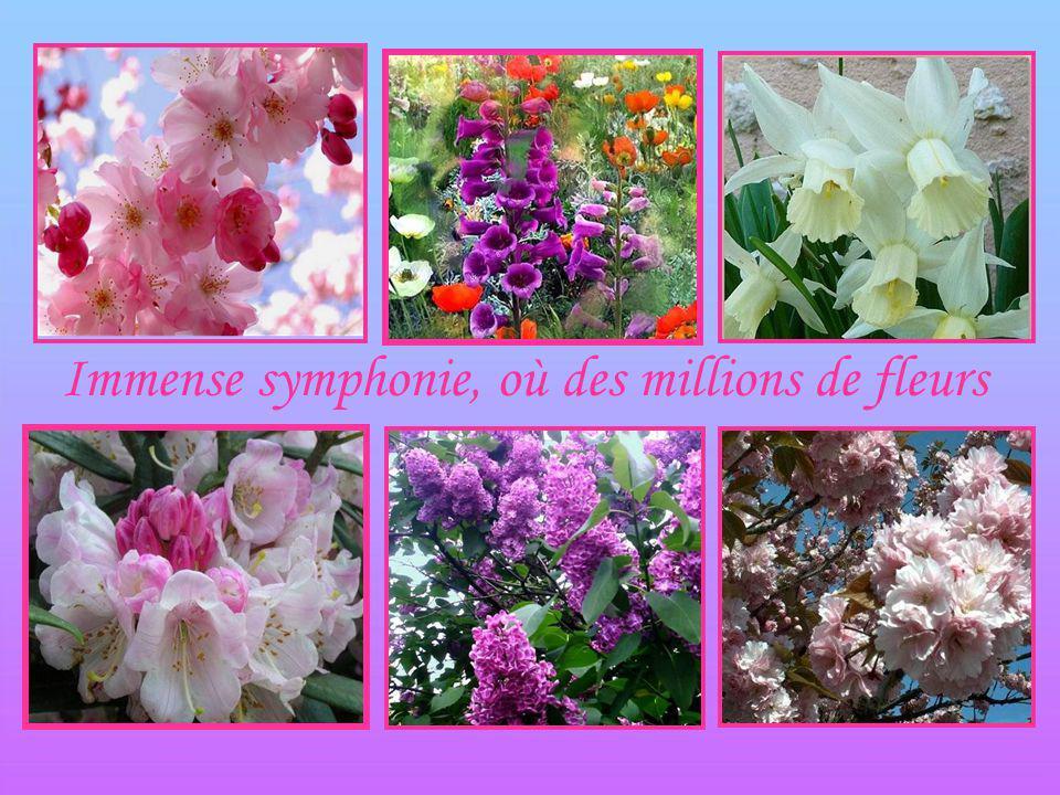 Immense symphonie, où des millions de fleurs