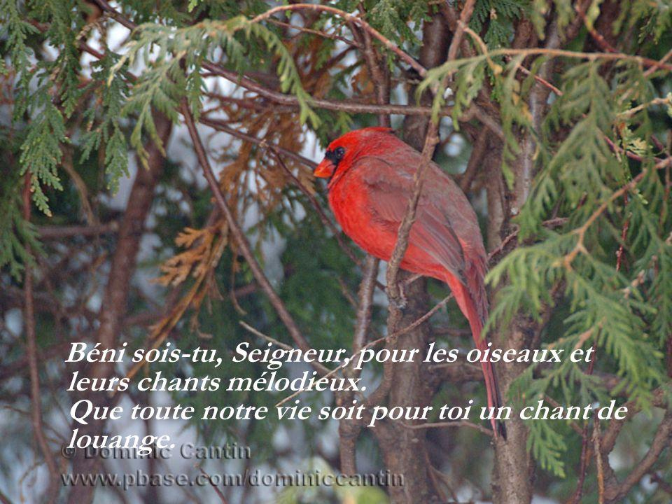 Béni sois-tu, Seigneur, pour les oiseaux et leurs chants mélodieux.