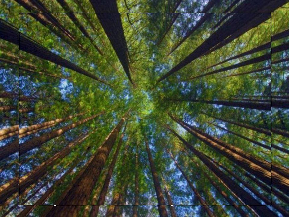 Tu verras, le soleil entrera dans ta forêt, il toffrira lui aussi du sang nouveau pour égayer tes espoirs perdus..