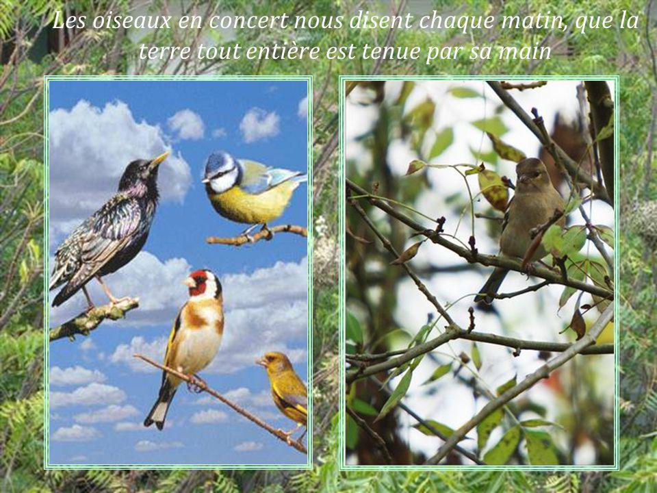 Les arbres se pliant au gré de tous les vents font entendre leurs voix en chantant