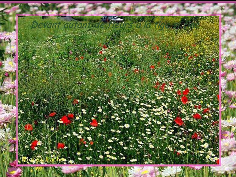 Devant autant de fleurs à la tige si fine