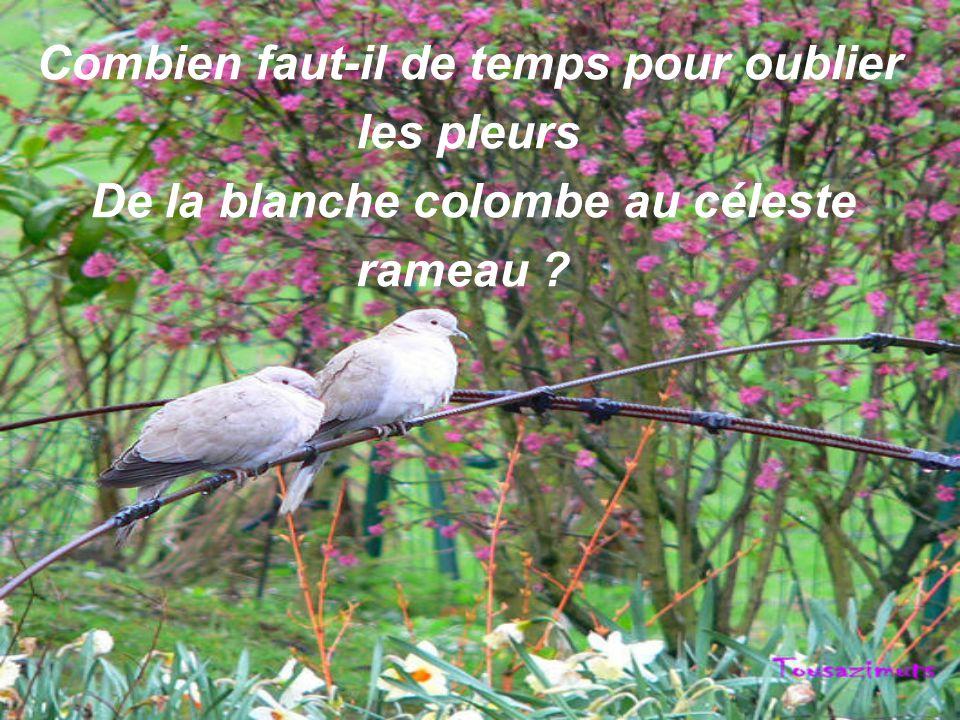 Combien faut-il de temps pour oublier les pleurs De la blanche colombe au céleste rameau ?