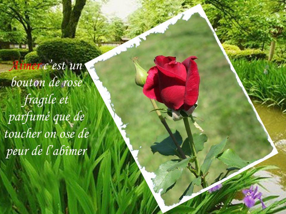 Aimer cest un bouton de rose fragile et parfumé que de toucher on ose de peur de labîmer