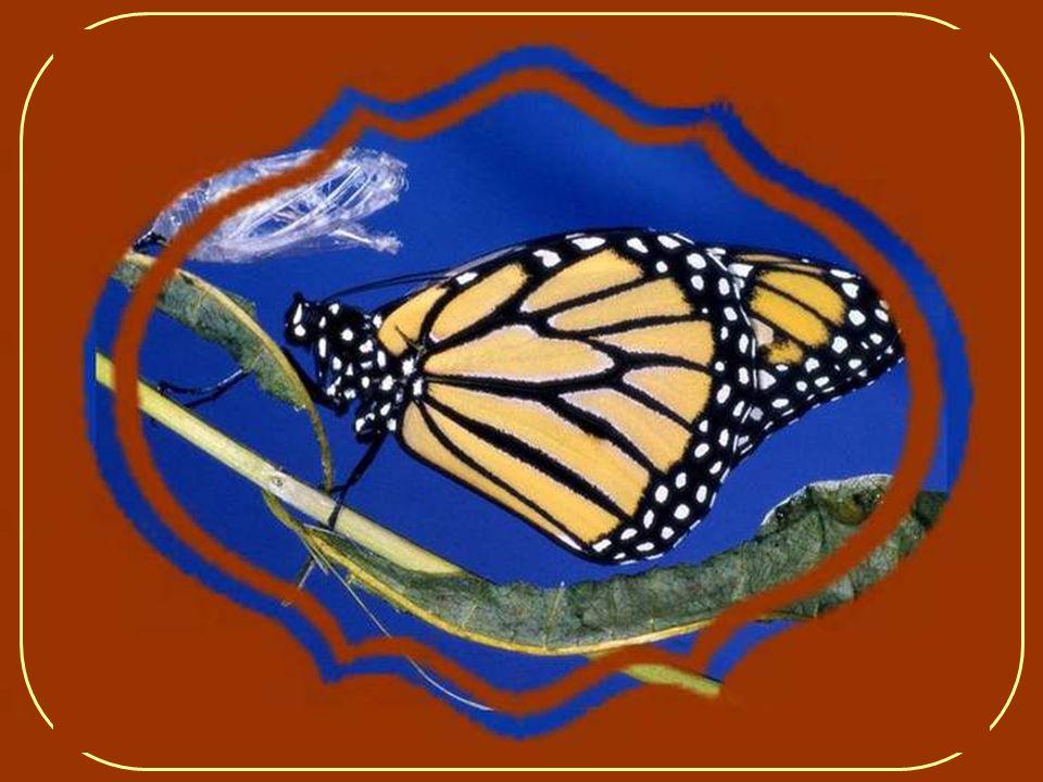 Photos de papillons trouvées sur le Web Texte : Jacky Musique : « Béni sois-tu Seigneur » (sans autres renseignements…) TRINITE1