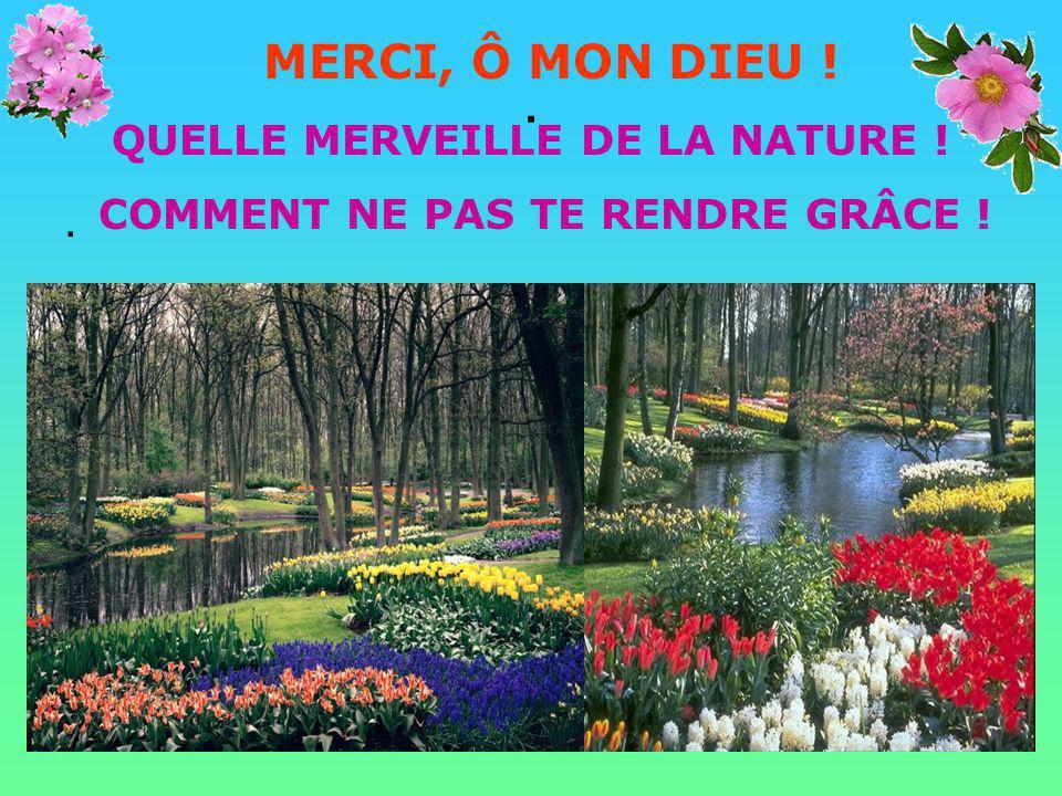 .. MERCI, SEIGNEUR Pour les milliers de fleurs aux formes variées et aux couleurs multicolores. Elles sont un reflet de ta beauté et de ta magnificenc