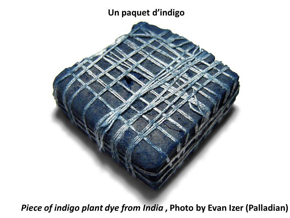Piece of indigo plant dye from India, Photo by Evan Izer (Palladian) Un paquet dindigo