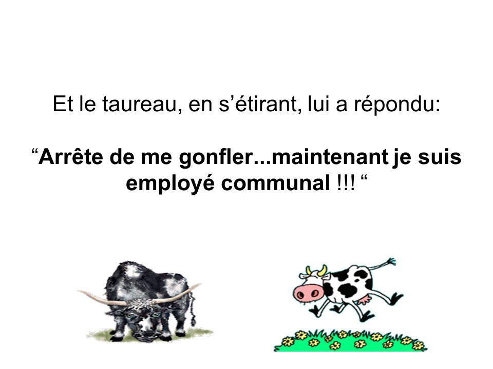 Et le taureau, en sétirant, lui a répondu:Arrête de me gonfler...maintenant je suis employé communal !!!