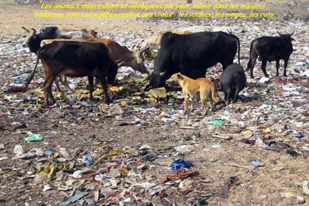Le Gange est extrêmement sale, abondance d ordures, les cadavres passent en flottant à tout moment.