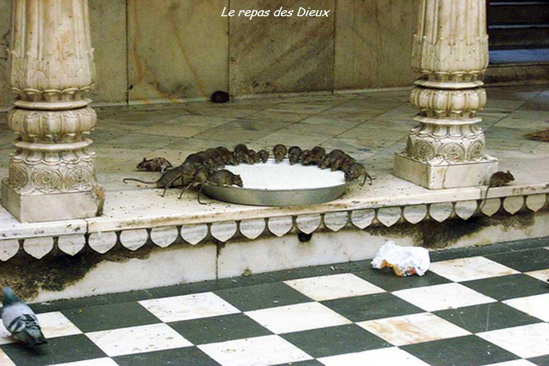Les animaux déambulent et défèquent partout, même dans les maisons ; beaucoup sont considérés comme des dieux : les vaches, les singes, les rats.
