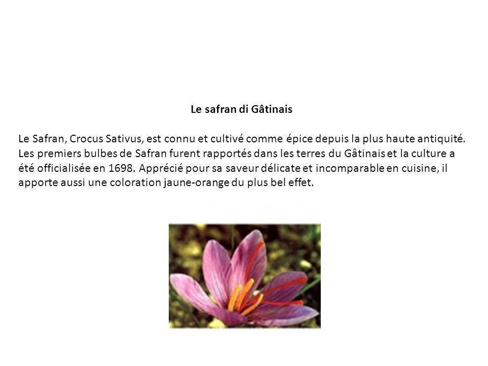 Le safran di Gâtinais Le Safran, Crocus Sativus, est connu et cultivé comme épice depuis la plus haute antiquité. Les premiers bulbes de Safran furent