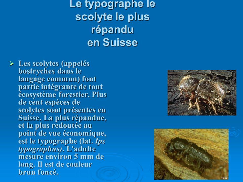 Le typographe le scolyte le plus répandu en Suisse Les scolytes (appelés bostryches dans le langage commun) font partie intégrante de tout écosystème