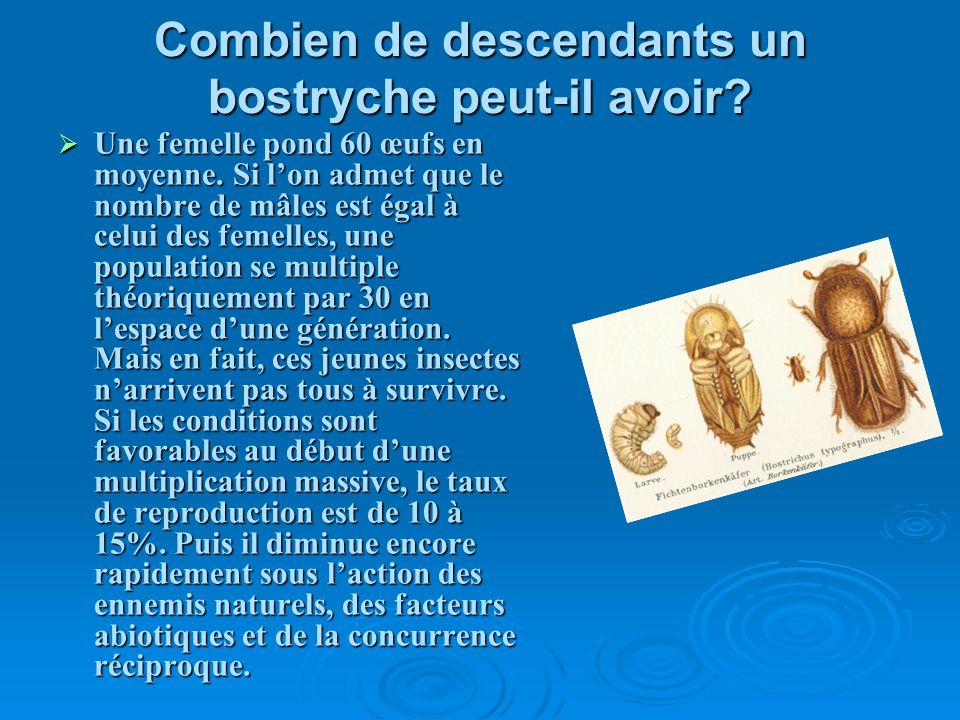 Combien de descendants un bostryche peut-il avoir? Une femelle pond 60 œufs en moyenne. Si lon admet que le nombre de mâles est égal à celui des femel