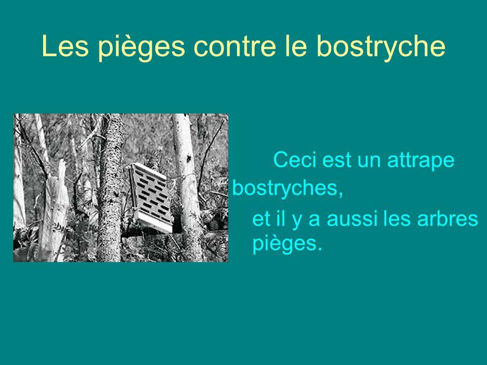 Les pièges contre le bostryche C eci est un attrape bostryches, et il y a aussi les arbres pièges.