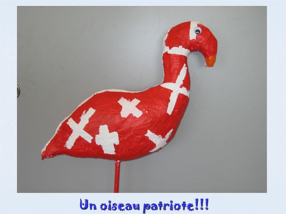 Un oiseau patriote!!!