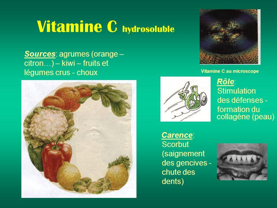 Vitamine C hydrosoluble Sources: agrumes (orange – citron…) – kiwi – fruits et légumes crus - choux Rôle: Stimulation des défenses - formation du collagène (peau) Carence: Scorbut (saignement des gencives - chute des dents) Vitamine C au microscope