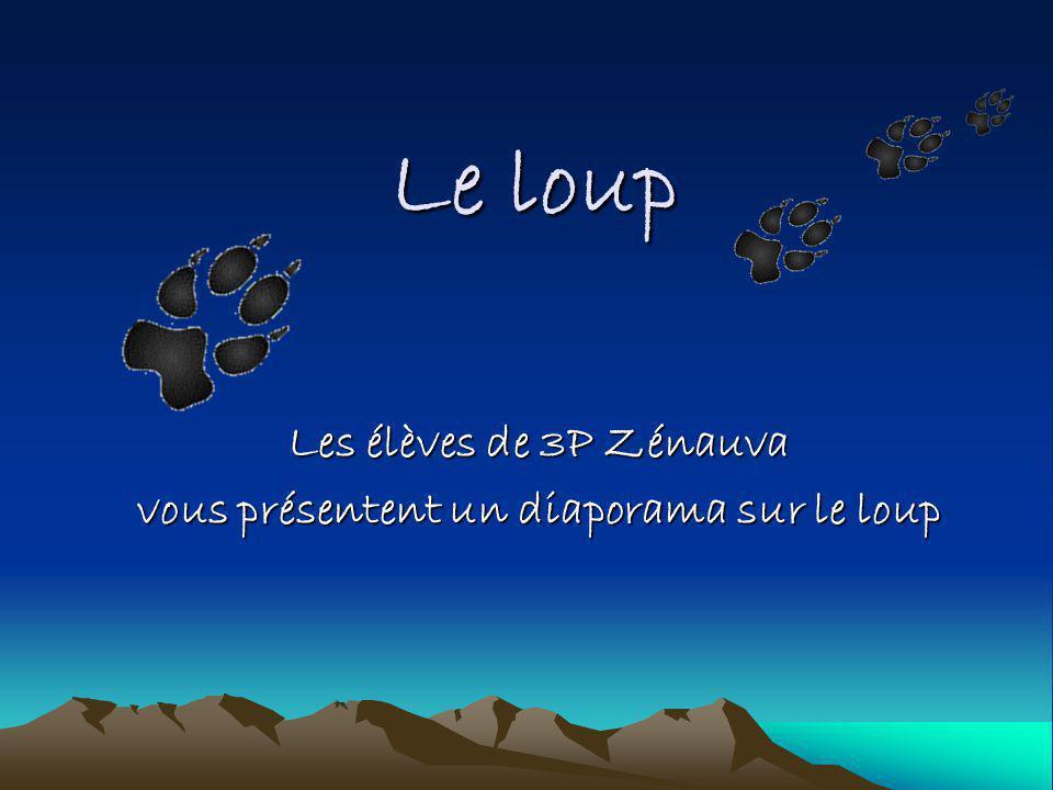 Le loup Les élèves de 3P Zénauva vous présentent un diaporama sur le loup