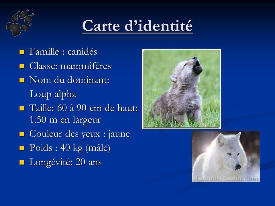 Carte didentité Famille : canidés Famille : canidés Classe: mammifères Classe: mammifères Nom du dominant: Nom du dominant: Loup alpha Loup alpha Tail