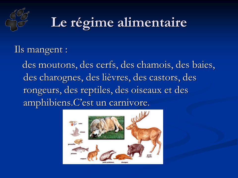 Le régime alimentaire Ils mangent : des moutons, des cerfs, des chamois, des baies, des charognes, des lièvres, des castors, des rongeurs, des reptile