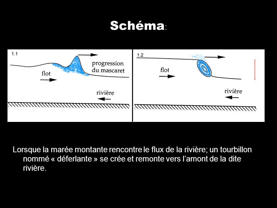 Schéma : Lorsque la marée montante rencontre le flux de la rivière; un tourbillon nommé « déferlante » se crée et remonte vers lamont de la dite riviè