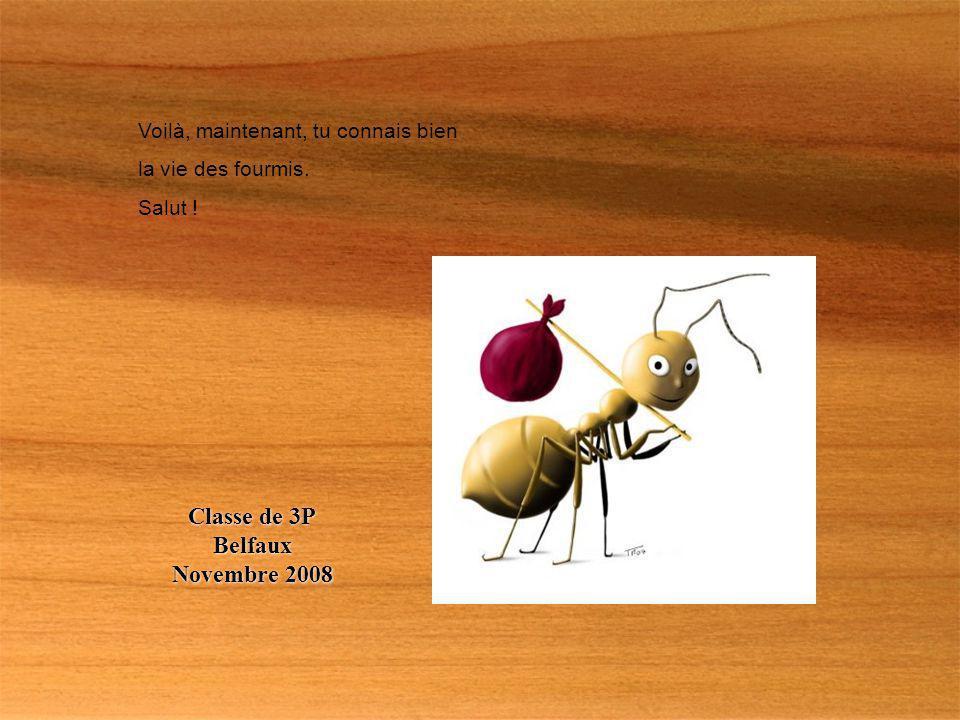 Voilà, maintenant, tu connais bien la vie des fourmis. Salut ! Classe de 3P Belfaux Novembre 2008