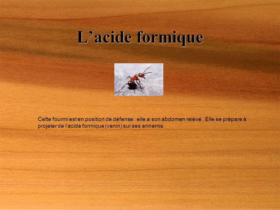 Lacide formique Cette fourmi est en position de défense : elle a son abdomen relevé. Elle se prépare à projeter de lacide formique (venin) sur ses enn