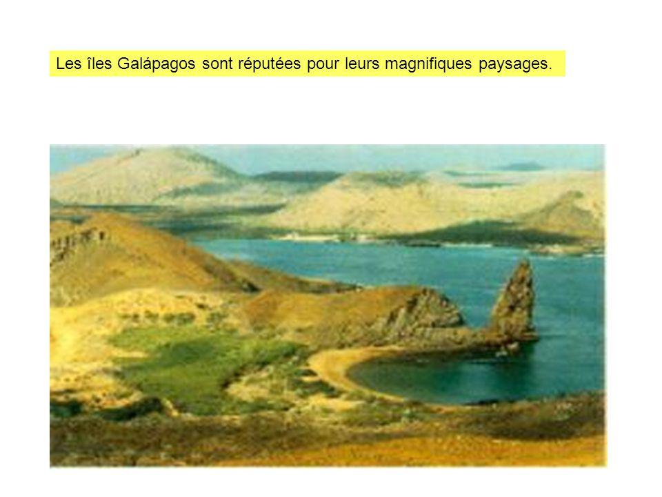 Les îles Galápagos sont réputées pour leurs magnifiques paysages.