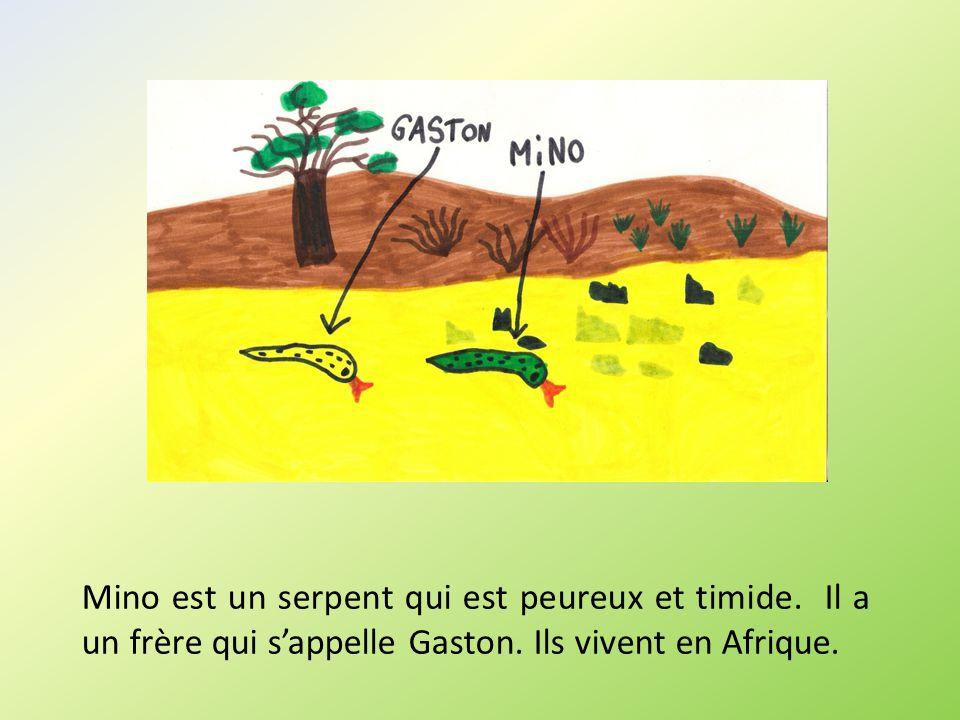 Mino est un serpent qui est peureux et timide. Il a un frère qui sappelle Gaston. Ils vivent en Afrique.