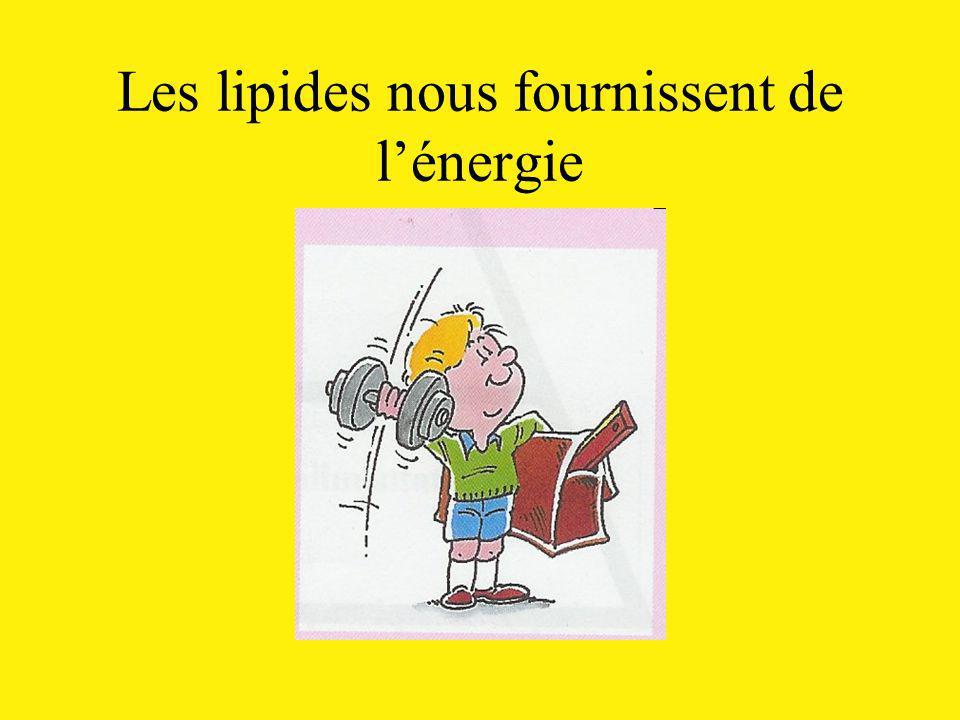 Les lipides nous fournissent de lénergie