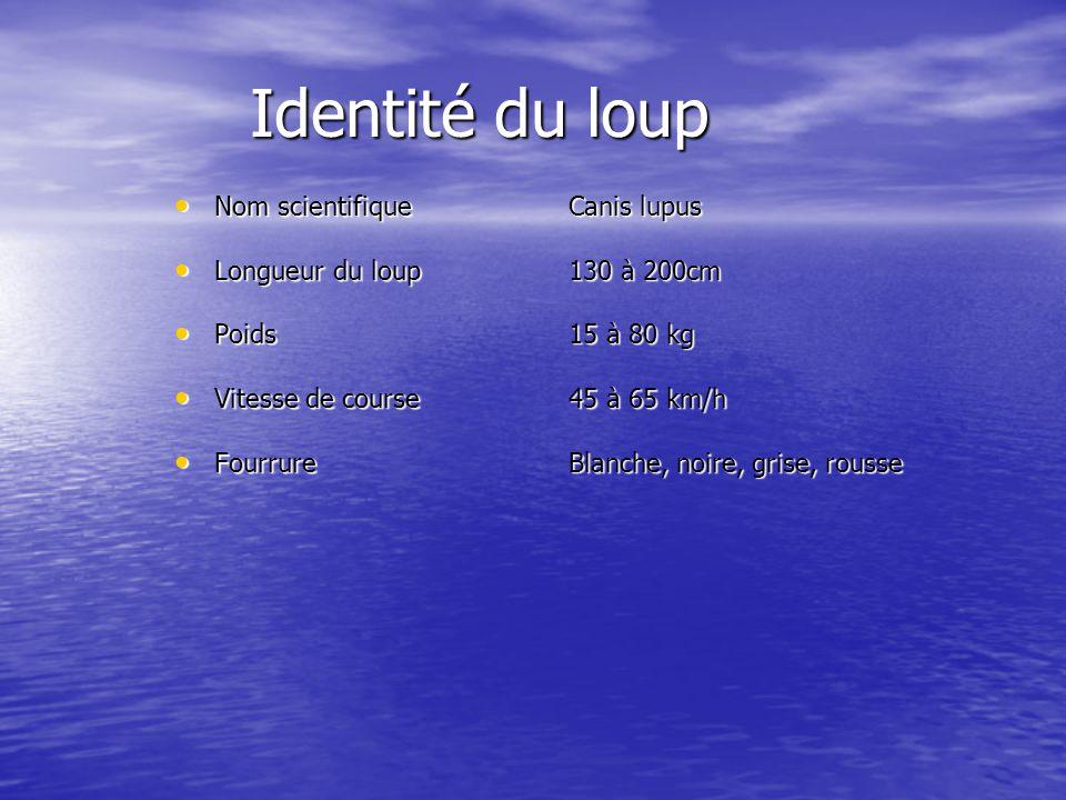 Identité du loup Nom scientifique Nom scientifique Longueur du loup Longueur du loup Poids Poids Vitesse de course Vitesse de course Fourrure Fourrure