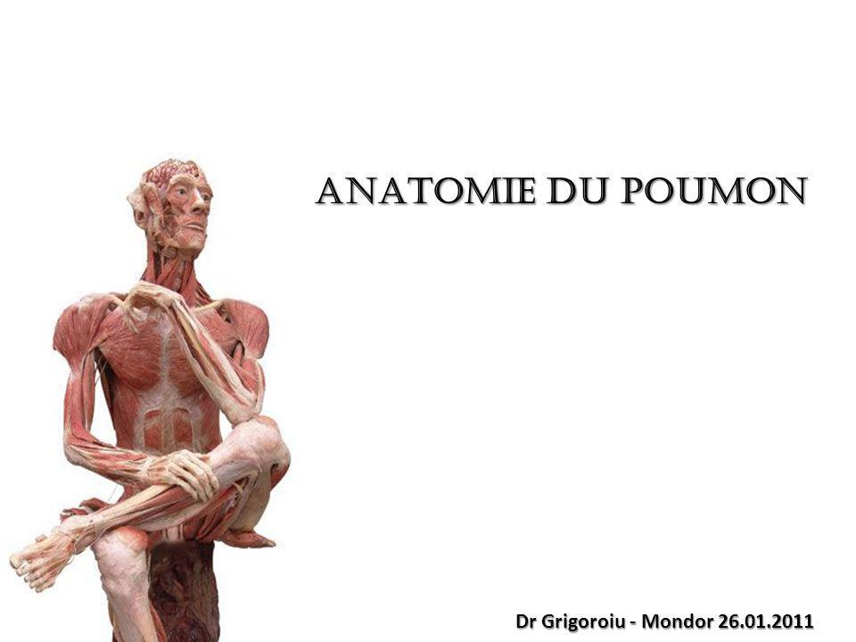 ANATOMIE DU POUMON Dr Grigoroiu - Mondor 26.01.2011