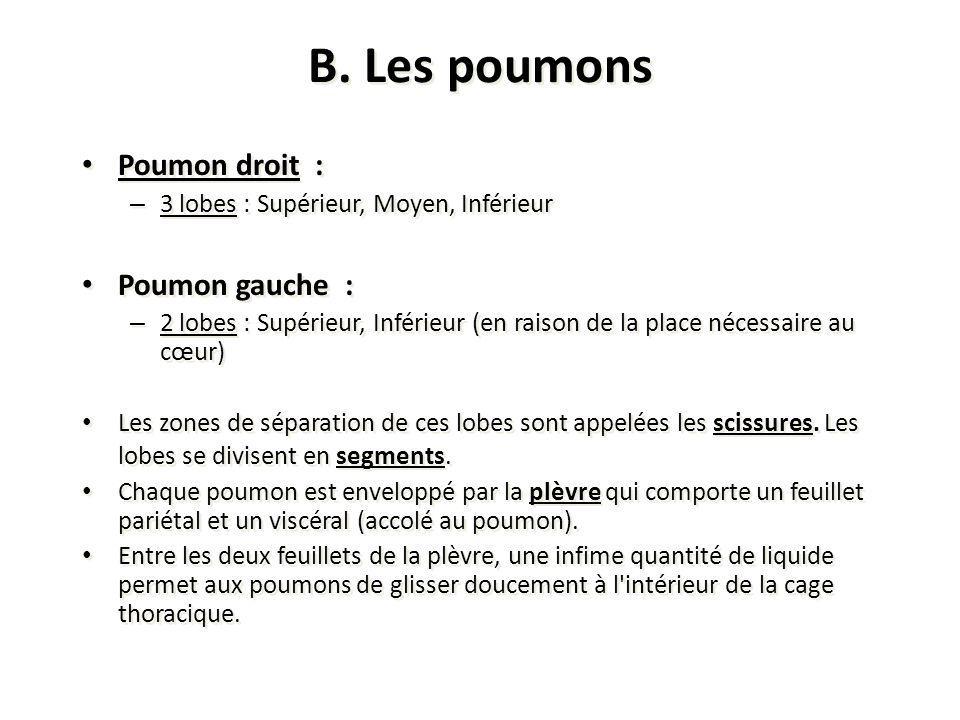 B. Les poumons Poumon droit : – 3 lobes : Supérieur, Moyen, Inférieur Poumon gauche : – 2 lobes : Supérieur, Inférieur (en raison de la place nécessai
