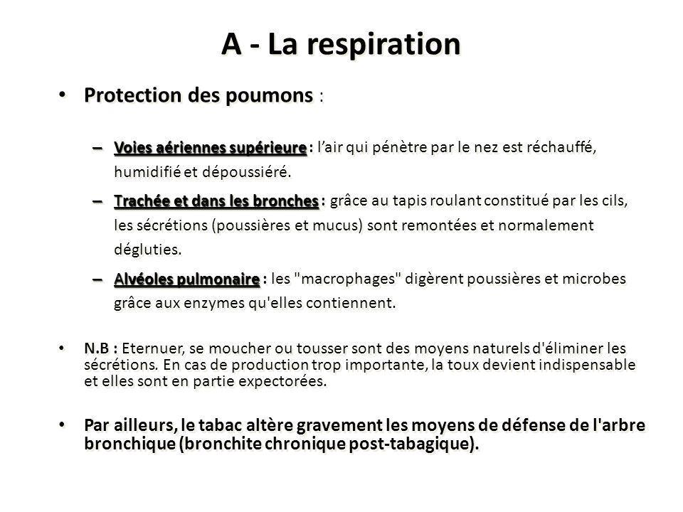 A - La respiration Protection des poumons : – Voies aériennes supérieure – Voies aériennes supérieure : lair qui pénètre par le nez est réchauffé, hum