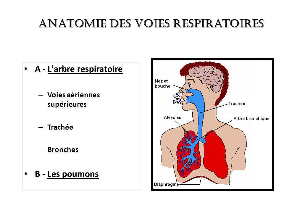 Anatomie des Voies Respiratoires A - L'arbre respiratoire – Voies aériennes supérieures – Trachée – Bronches B - Les poumons A - L'arbre respiratoire