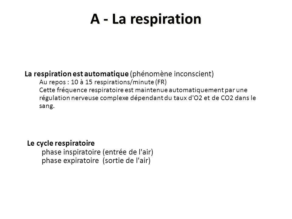 Le cycle respiratoire phase inspiratoire (entrée de l'air) phase expiratoire (sortie de l'air) La respiration est automatique (phénomène inconscient)