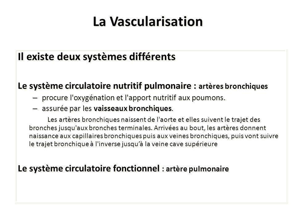 La Vascularisation Il existe deux systèmes différents Le système circulatoire nutritif pulmonaire : artères bronchiques – procure l'oxygénation et l'a