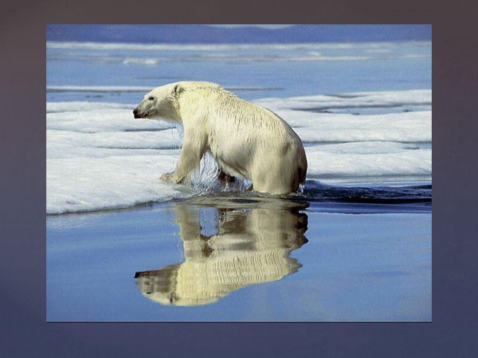 Polarcath
