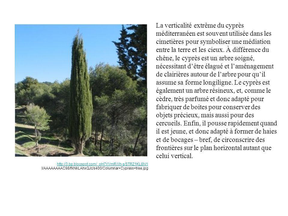 La verticalité extrême du cyprès méditerranéen est souvent utilisée dans les cimetières pour symboliser une médiation entre la terre et les cieux. À d
