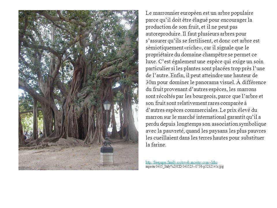 Le marronnier européen est un arbre populaire parce quil doit être élagué pour encourager la production de son fruit, et il ne peut pas autoreproduire