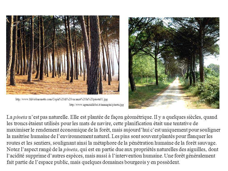 http://www.fulviobaronetto.com/Copia%20di%20vacanze%20la%20pineta01.jpg http://www.agenziafabbri.it/immagini/pineta.jpg La pineta nest pas naturelle.