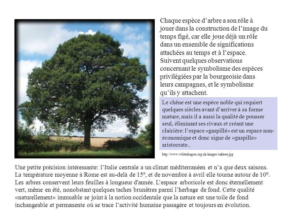 http://www.whitedragon.org.uk/images/oaktree.jpg Le chêne est une espèce noble qui requiert quelques siècles avant darriver à sa forme mature, mais il a aussi la qualité de pousser seul, éliminant ses rivaux et créant une clairière: lespace «gaspillé» est un espace non- économique et donc signe de «gaspille» aristocrate..