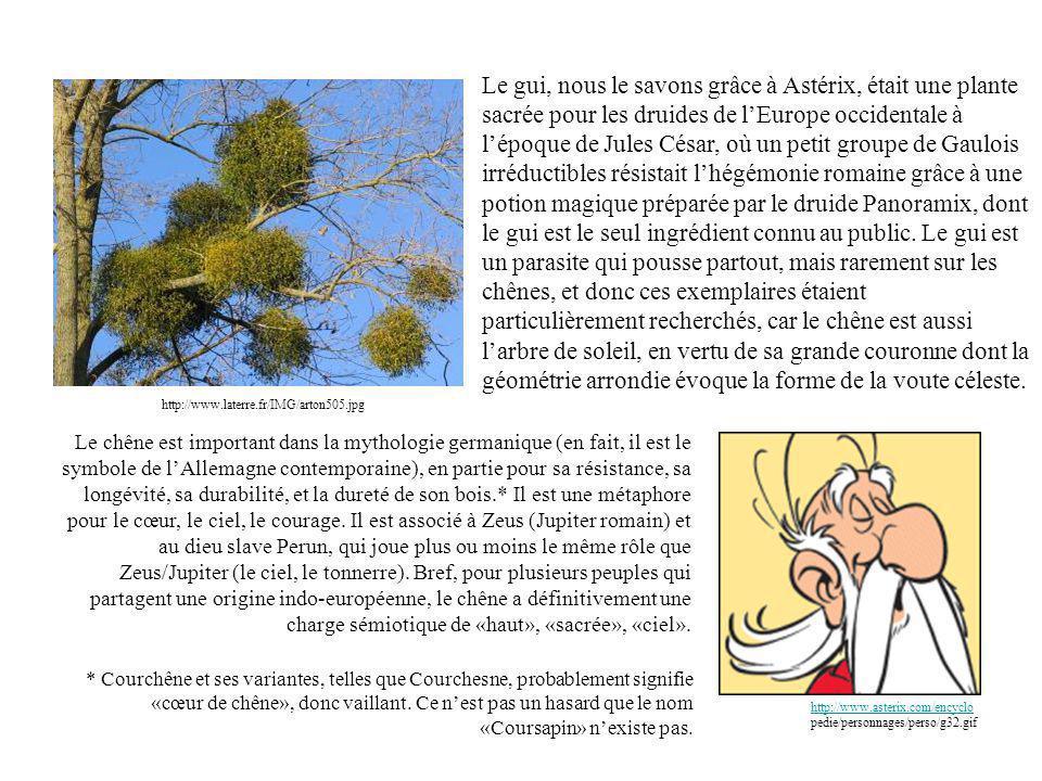 http://www.laterre.fr/IMG/arton505.jpg Le gui, nous le savons grâce à Astérix, était une plante sacrée pour les druides de lEurope occidentale à lépoque de Jules César, où un petit groupe de Gaulois irréductibles résistait lhégémonie romaine grâce à une potion magique préparée par le druide Panoramix, dont le gui est le seul ingrédient connu au public.